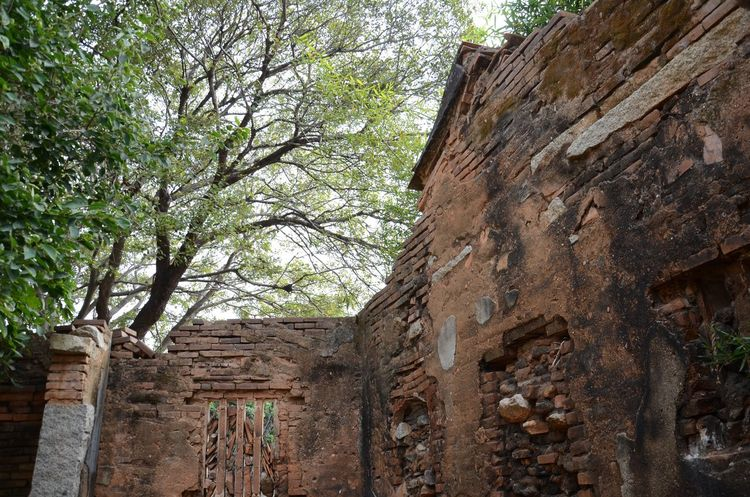 Abandoned Architecture Built Structure Deterioration Obsolete Old Ruined Tree Brick Wall Aging Ruins Old Building  Wall