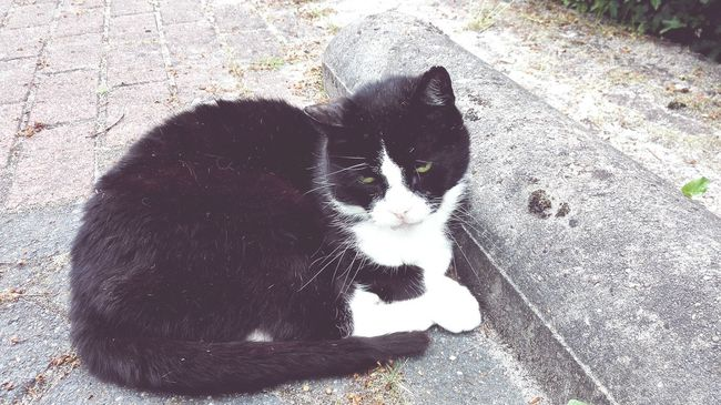 Cats Cat Lovers Catsofeyeem Kitty Cat Cat♡ Cats Of EyeEm Catoftheday Cat Animals Of Eyeem Pets Of Eyeem Streetphotography Street Photography Animalsofthestreet Blackcatlove Blackandwhitecat