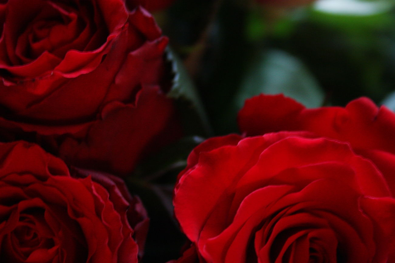 Background Backgrounds Beauty In Nature Bouquet Close-up Day Flower Flower Head Fragility Freshness Love Love Love ♥ Nature Outdoors Petal Red Red Rose - Flower Roses Roses Are Red Roses Flowers  Valentine Valentine's Day  Valentines Day