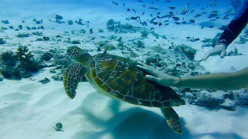 Animals Beach Beachinspector.com Beauty In Nature Bestoftheday Blue Close-up Eye4photography  EyeEm EyeEm Best Shots EyeEm Gallery EyeEm Nature Lover EyeEmBestPics Fish Idyllic Natural Pattern Nature No People Outdoors Sky Tranquil Scene Tranquility Turtle UnderSea Water