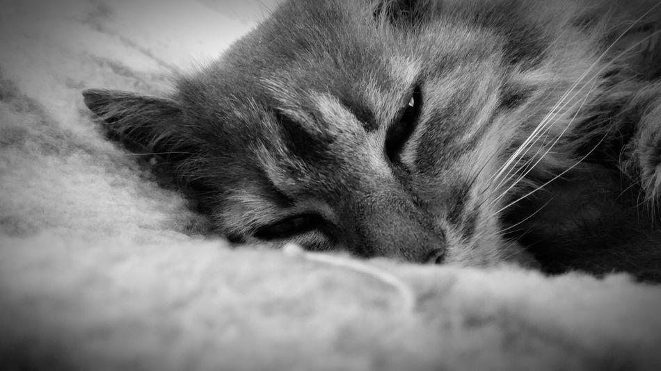 Sleep One Animal Animal Themes Domestic Animals Taking Photos Photography EyeEm Best Shots Eyeem Best Shot Blackandwhite