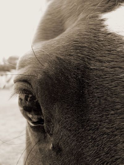 HORSE Loving Close-up One Animal 🐴horses&ponies🐴 EyeEmNewHere