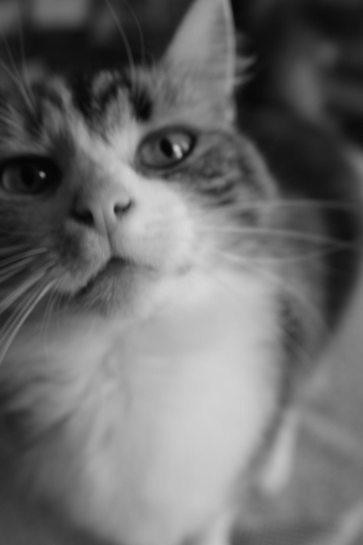 My dear Precious in monochrome Love Cat My Pet Back And White Monochrome Cute Caught You