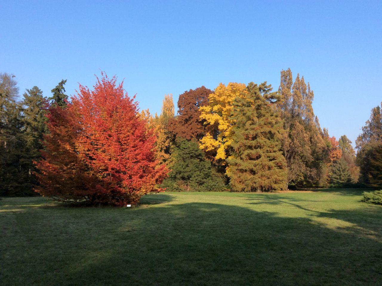 Red Yelow Brown Autumn Autumn Colors Autumn Leaves Blue Sky Szarvas Arboretum