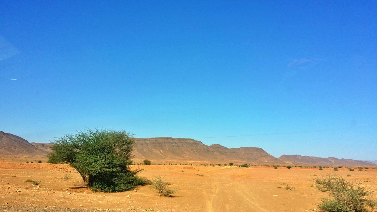 The Great Outdoors - 2017 EyeEm Awards Acacia Desert Sand Sand Dune Arid Climate Landscape Clear Sky Sunny Blue Nature Scenics Drought Heat - Temperature Outdoors No People Day Beauty In Nature Tree Sky EyeEmNewHerein Mhamid El Ghizlane Mhamid Morocco