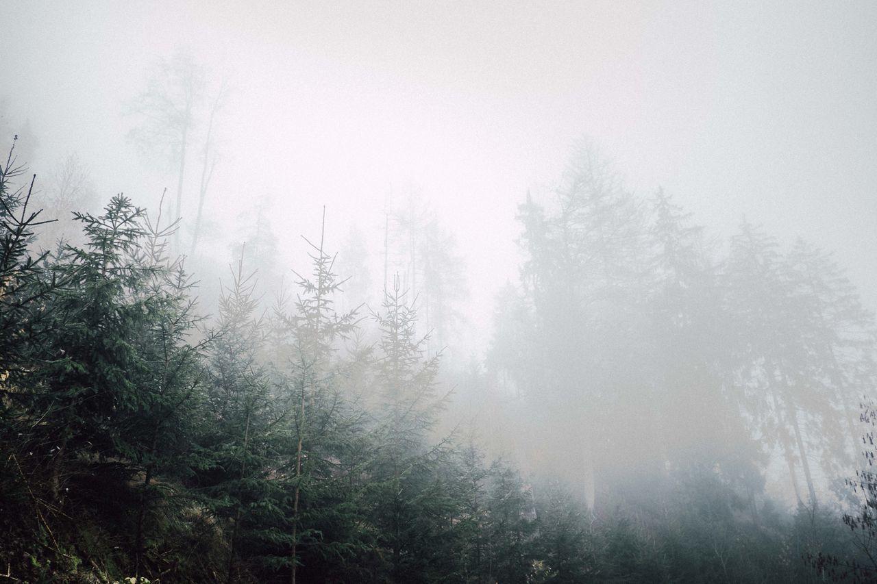 Daylight Foggy Foggy Landscape Foggy Morning Germannature Germany Melancholic Melancholic Landscapes Melancholic Mood Moody Mystery Thueringerwald First Eyeem Photo EyeEmNewHere
