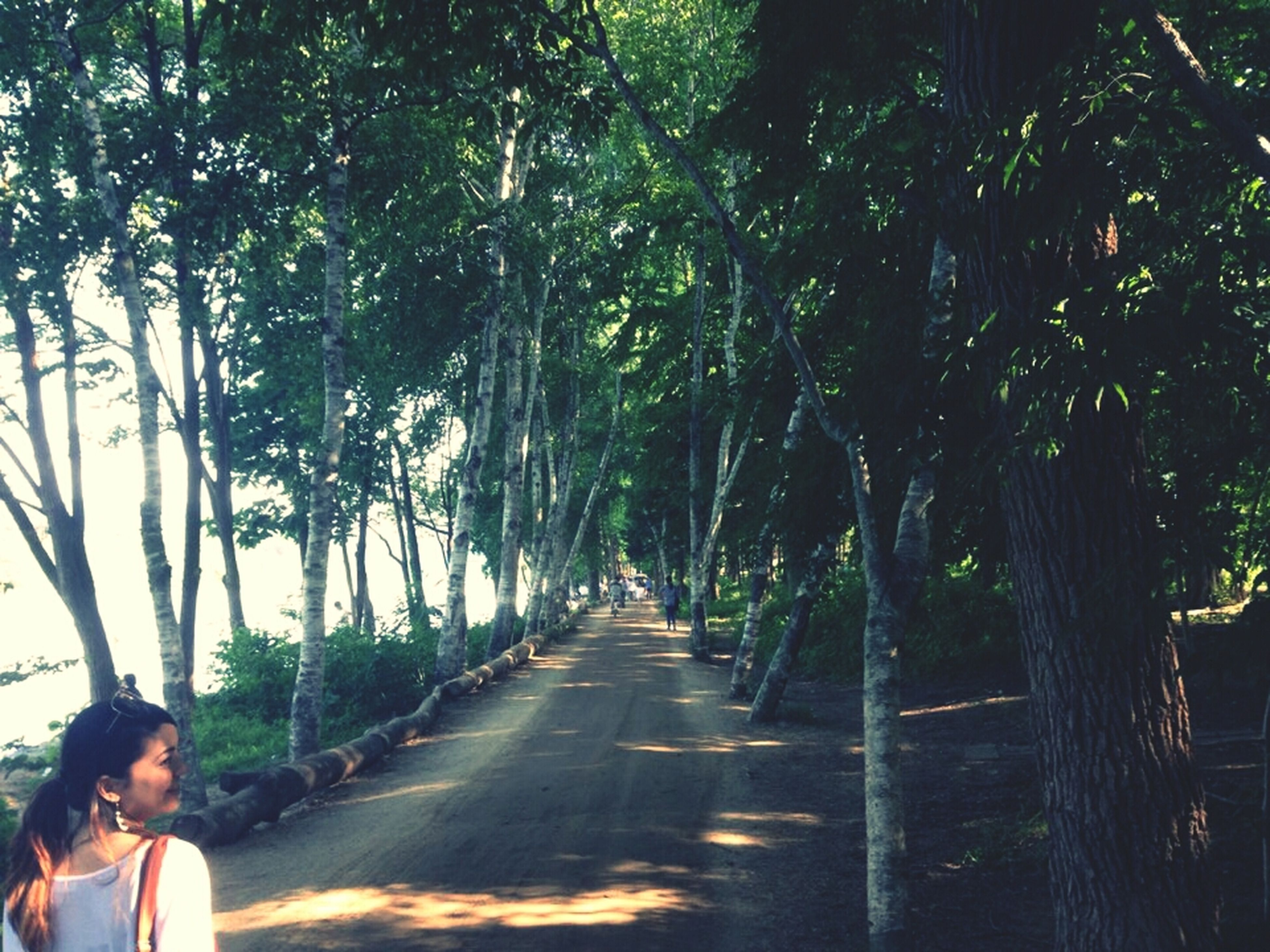 tree, lifestyles, the way forward, leisure activity, men, rear view, transportation, road, diminishing perspective, walking, person, tree trunk, growth, treelined, vanishing point, sunlight, street