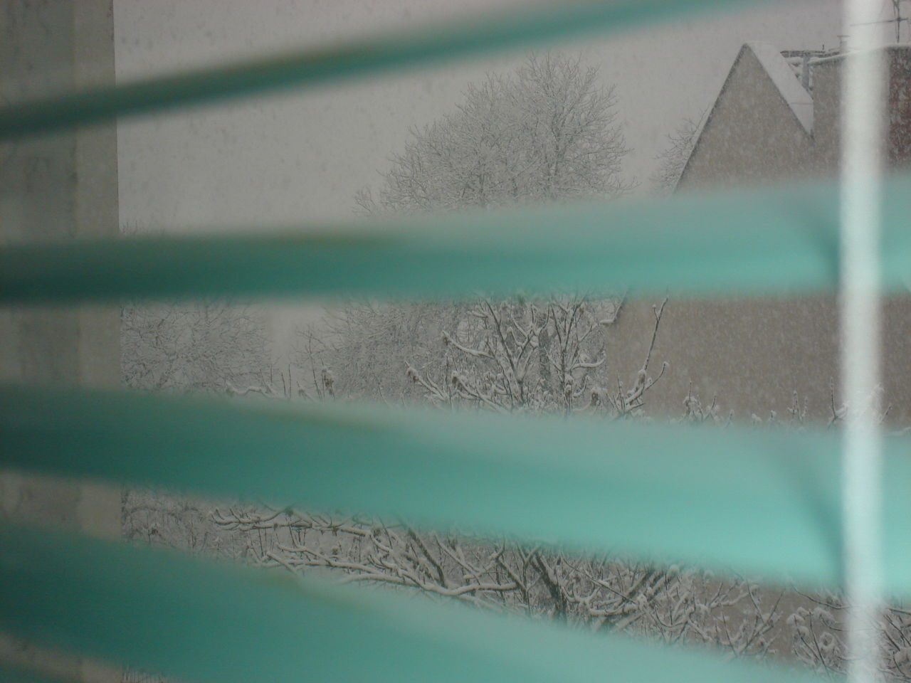 Day No People Outdoors Snowing Snowing Day Snowing Outside Snowing ❄ Weather Window Window View Winter Wintertime