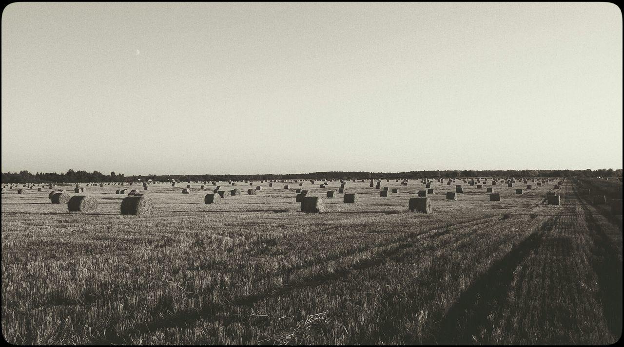 Русское поле поле Русское поле пщеница Чб деревня село Field Russia Russian Fields Bw