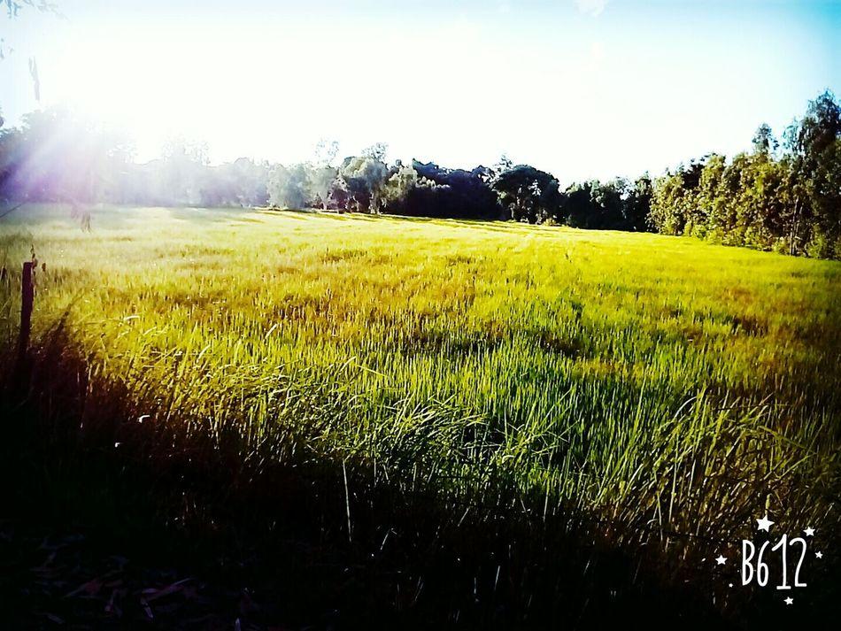Relaxing Excercising Jogging