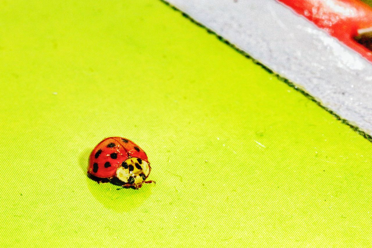 Ladybug🐞 LadyBugLove Bugs! Green Color No People Animal Themes Close-up Macro Insects Macro Photography Macroporn Macro Bugs Close Up Photography