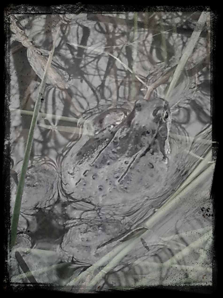 Frogs Impossible Moments Spring