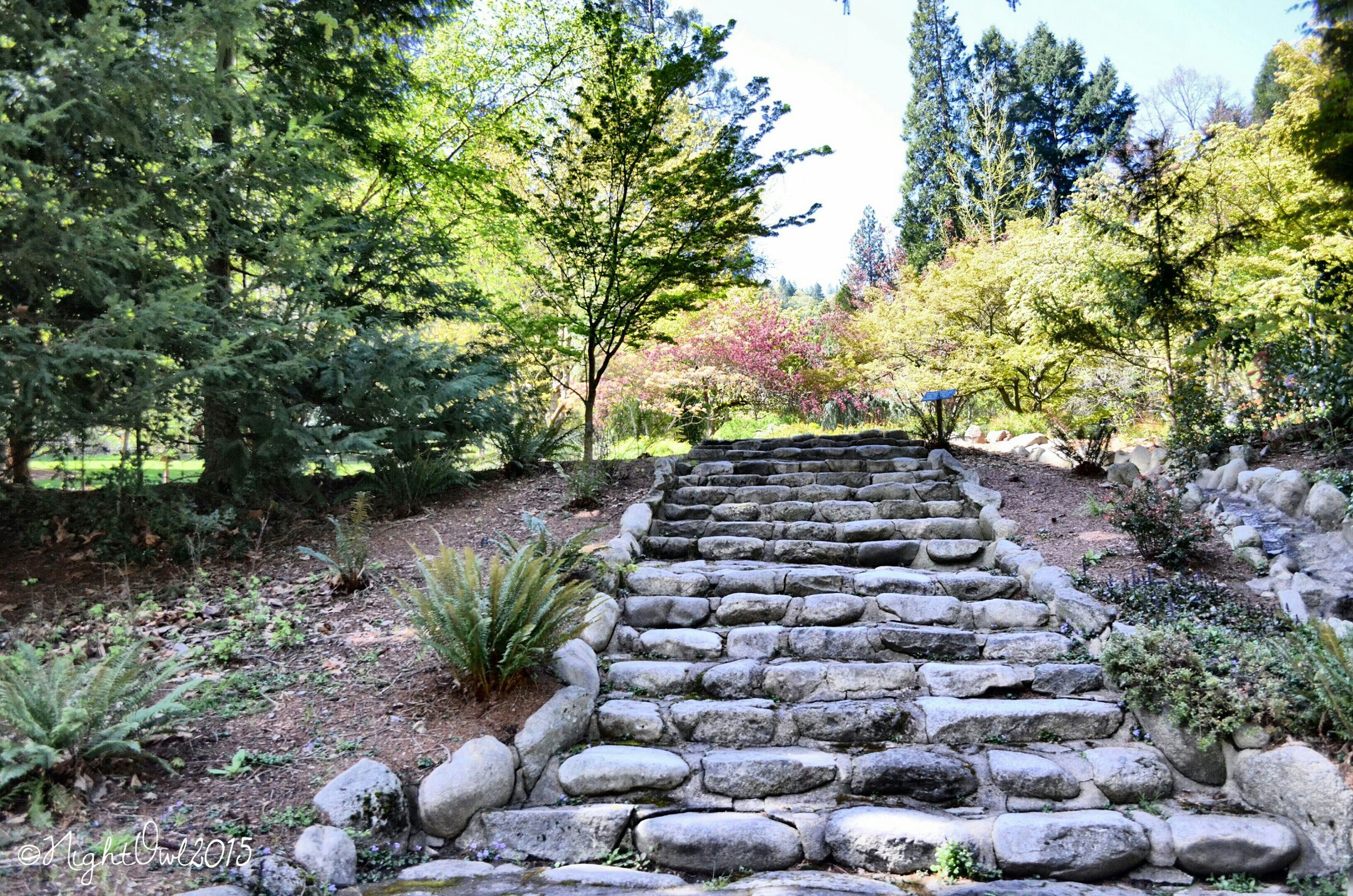 tree, growth, steps, built structure, stone wall, the way forward, plant, architecture, clear sky, tranquility, rock - object, nature, stone - object, tranquil scene, day, forest, outdoors, no people, stone, beauty in nature