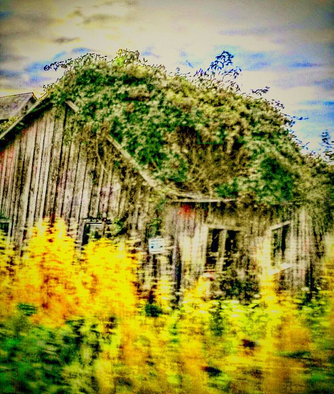 I love how this looks like a drawing or a painting. Editing is addictive!⭐Reedited Hanging Out Taking Photos Taken Back Oregonexplored Old Barns Beauty Overgrown In The Country EyeEm Gallery Barnology Barnhouse Overgrown And Beautiful Reclaimed By Nature Beautiful Nature This View Fine Art Photography Getty Images Architecture_collection On The Road Carries Picks Mother Nature 43 Golden Moments Framer Farm Life Hidden Gems
