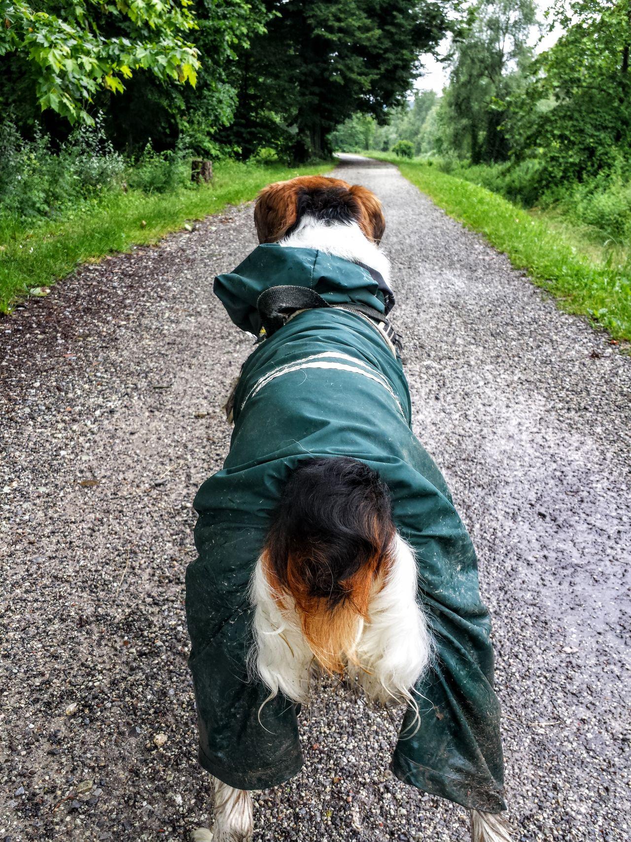 Dog Nemo Amazing Dog Casual Clothing Cute Dog  Dog Dog Day Dog Life Dog Of Eyeem Domestic Animals EyeEm Dog Pets Feel The Journey Showcase June