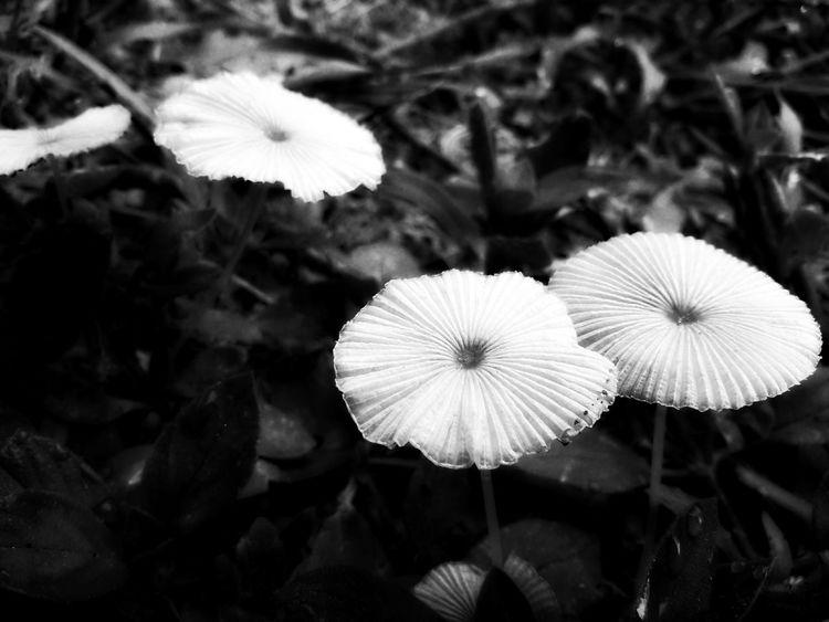 Toadstools Fungus Variation Fungus Flowers Fairyland Mushrooms Fungus Amongus Mushroom Collection Perspectives On Nature