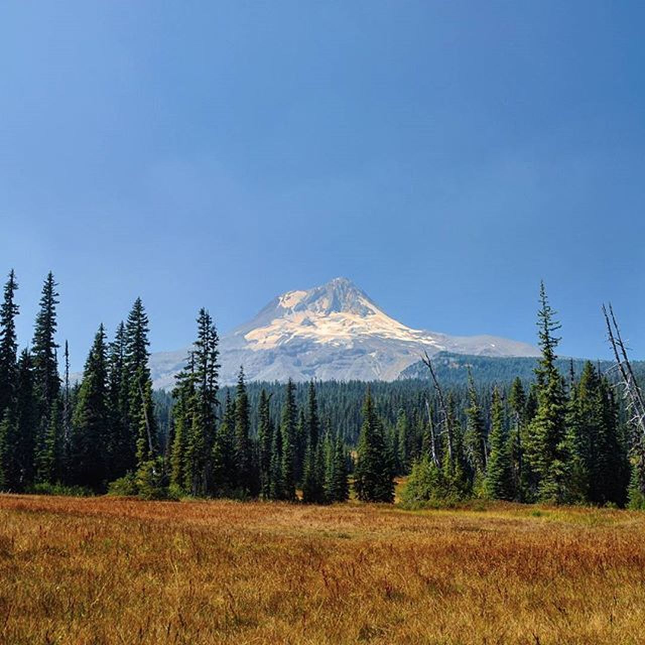 Mount Hood from Elk Meadows. MtHood Mthoodnationalforest Mounthood Oregonnw Oregonexplored Oregon Northwest Upperleftusa Upperleft Pacificnorthwest PNW Wilderness Forest Meadow Elkmeadows Hiking Golivexplore Mountain Mountains Volcano Volcanic