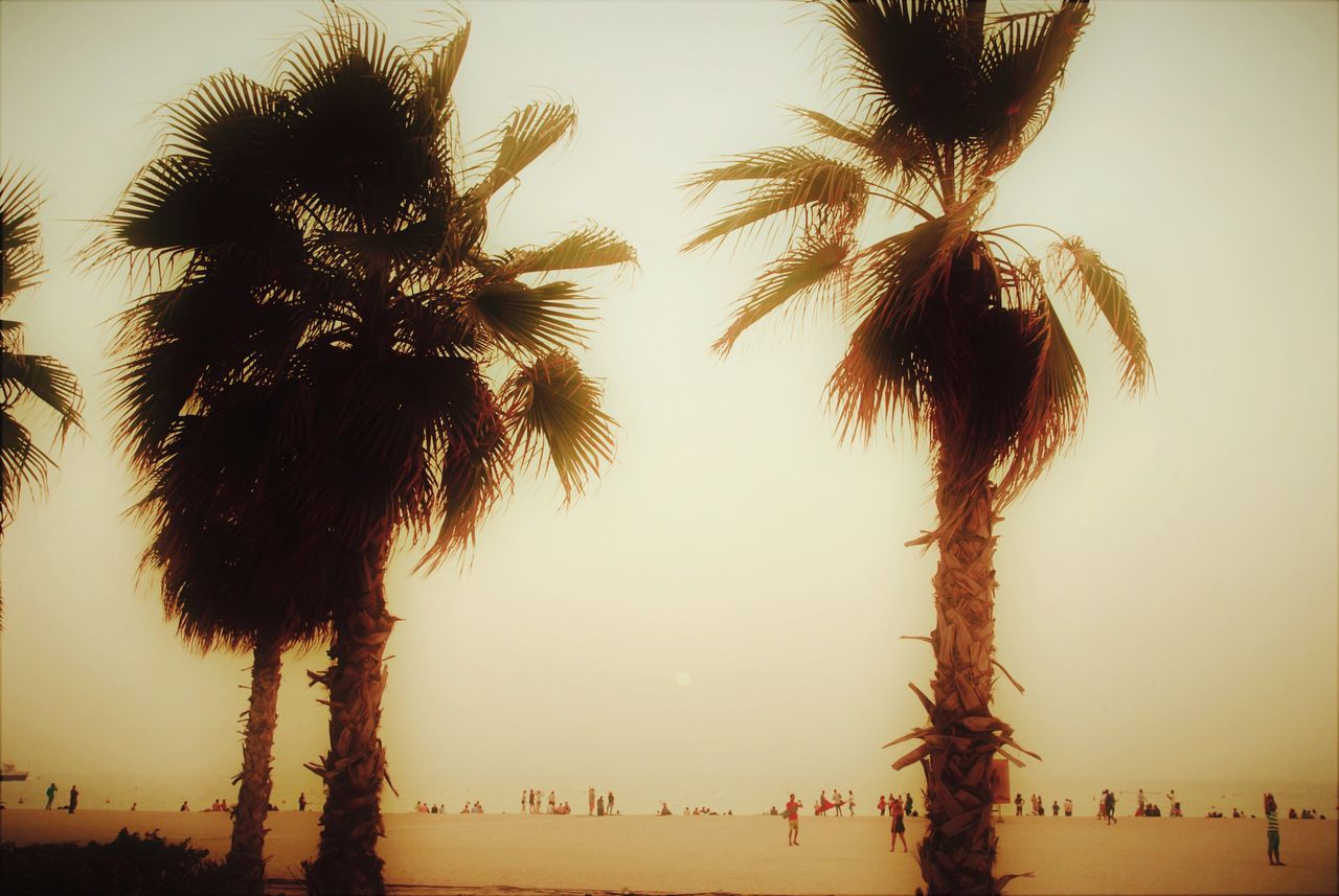 palm tree, tree, beach, outdoors, sky, sea, nature, tree trunk, large group of people, growth, beauty in nature, real people, vacations, clear sky, scenics, day, horizon over water, people
