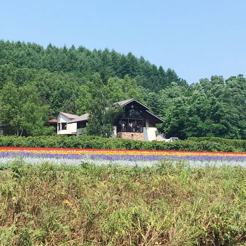Japan FARMTOMITA Built Structure Tree Architecture Building Exterior Growth Day Plant Tranquility No People Country House Outdoors Tranquil Scene Field Nature Green Color Clear Sky Landscape Sky Beauty In Nature