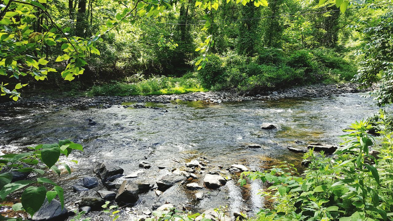 Showcase June Swedish Cabin Taking Photos The Great Outdoors With Adobe Spring 2016 Streams Of Water Creekside Trail Nature_collection