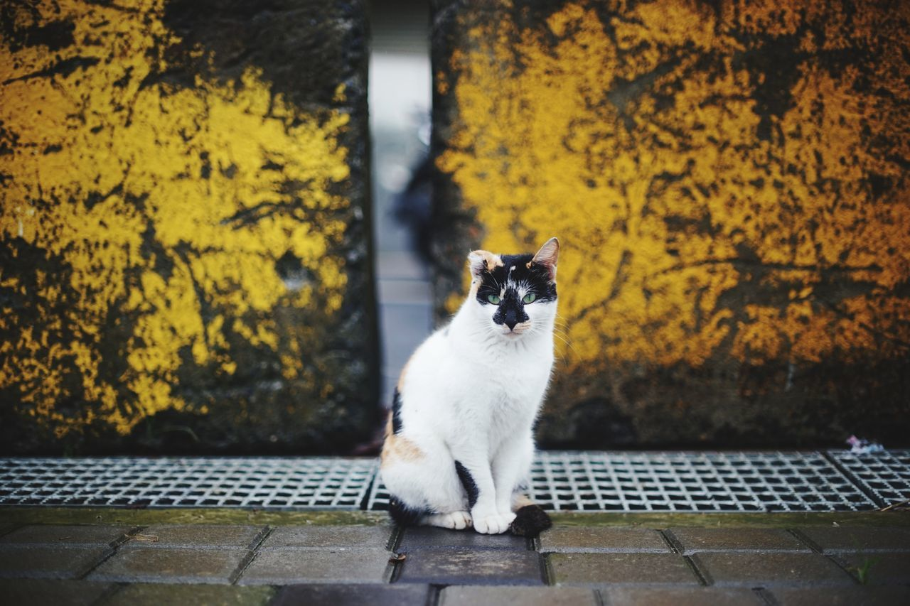 One Animal Domestic Cat Domestic Animals Sitting Animal Themes Portrait Animal Pets Outdoors 街貓 Animals In The Wild Feline Animal Wildlife Katze Looking At Camera Streetphotography Mammal