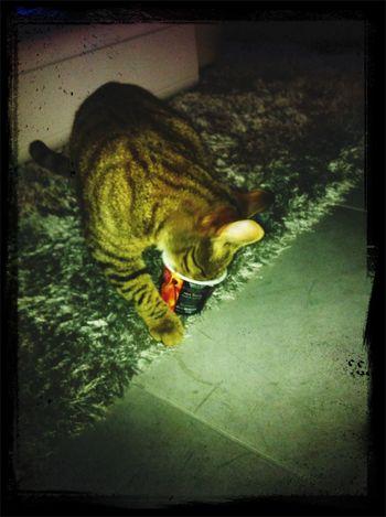 Oups coincée!! ^^ ? I Love My Cat ❤