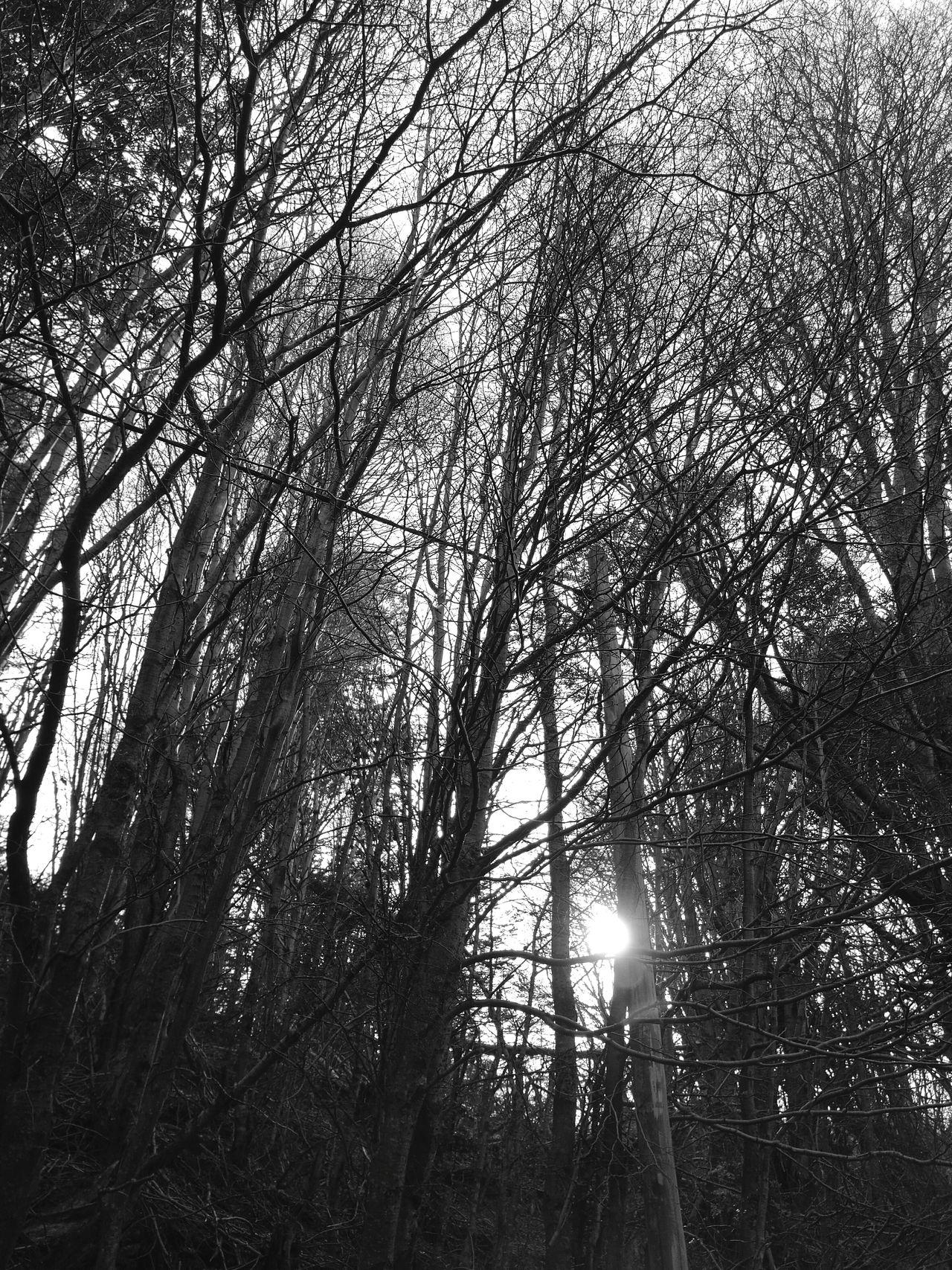 Beauty In Nature Scenics Non-urban Scene Nature Tranquil Scene Bare Tree Low Angle View Forest Tree Blackandwhite Photography Black & White Ushuaia Tierradelfuego Ushuaia Paisaje Argentina 👑🎉🎊👌😚😍 Fin Del Mundo Ushuaïa Ushuaia Arg. Argentina Photography Ushuaia Argentina Argentina Majestic Nature