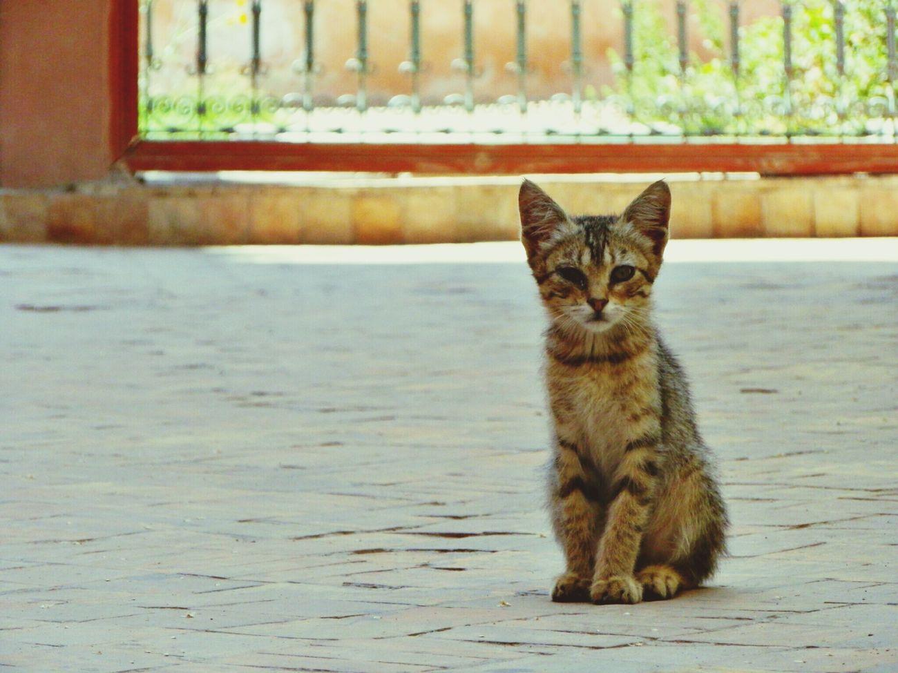 Animal_collection Animal Love EyeEm Best Shots EyeEm Nature Lover