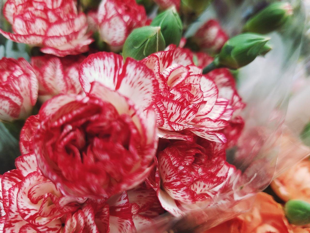 Supermarket Flowers. Flower Flower Head Red Close-up Plant EyeEm Best Shots Freshness EyeEm Selects EyeEm Patterns In Nature