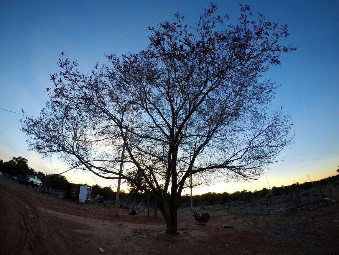Dark Photography Darkness And Light Chillin Out At Home EyeEm Best Shots Fish Eye No People Low Angle View Cold Feeling Cool Day Blue Sky Arizona Sunset Pleasing_view Relaxing Beauty In Nature Nature Outdoors Tree Sky Silhouette Arizona Desert Adventure Arizona Sky Average Day