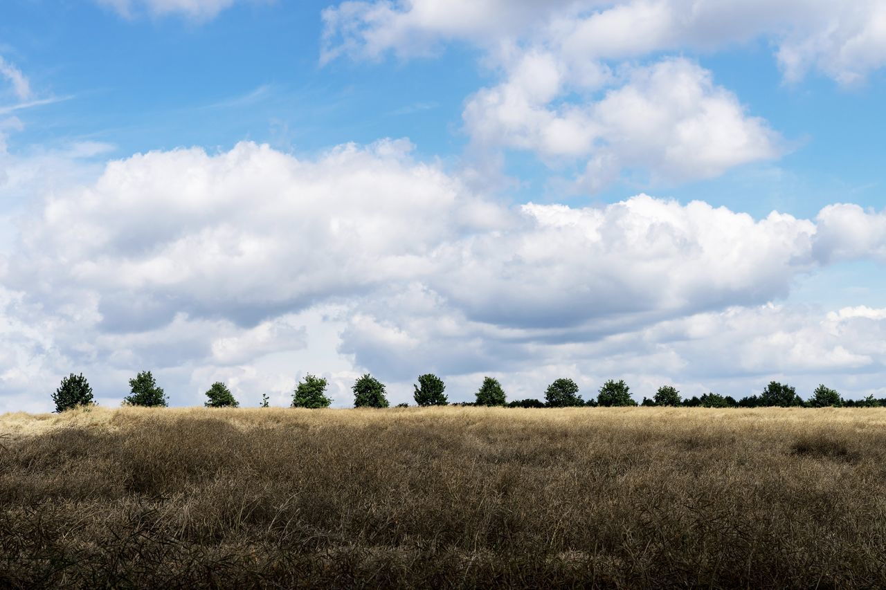 Agriculture Beauty In Nature Cereal Plant Cloud - Sky Crop  Day Grass Growth Landscape Landscape_Collection Landscape_photography Landscapes Nature Nature Nature Photography Nature_collection Naturelovers No People Outdoors Rural Scene Scenics Sky Tranquil Scene Tranquility Tree