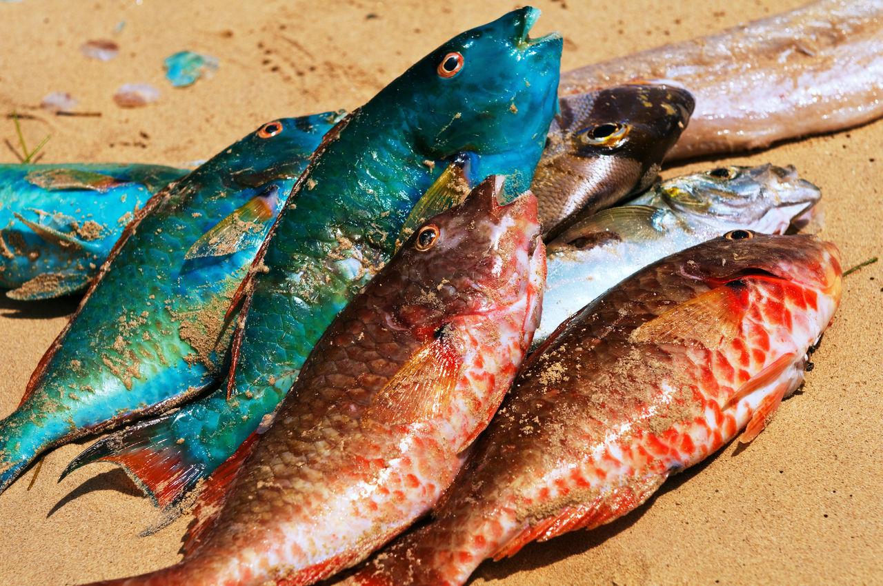 Dead tropical fish
