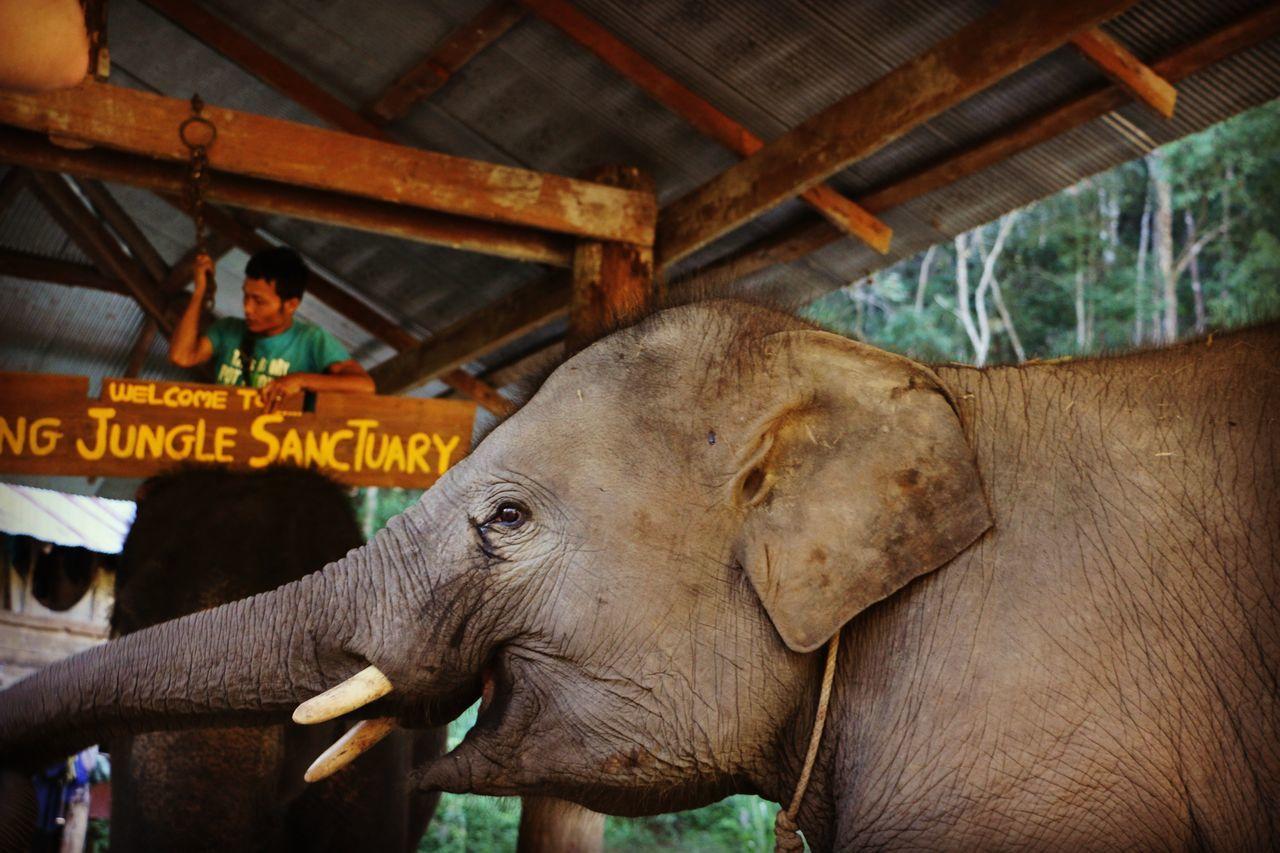 Elephant Jungle Sanctuary  Peaceful Photography Roadtrip Travel Culture Mahout Thaïlande