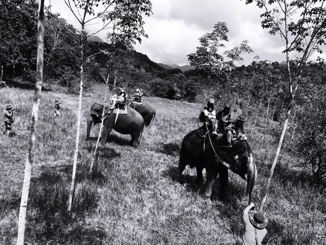 Elephant Elephant Trip Jungle Koh Chang