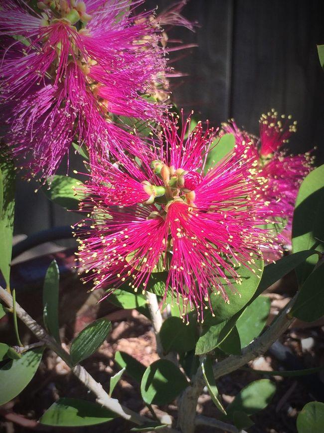 Flowers,Plants & Garden Urban Spring Fever Water Conversation Park. Nature Walk
