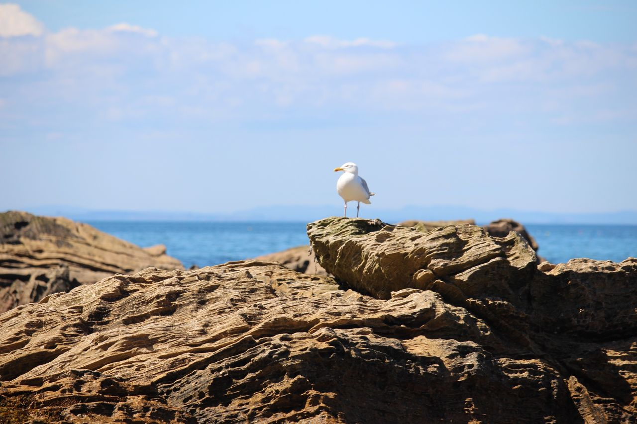 Alone Bird Animals In The Wild Animal Themes Perching Animal Wildlife One Animal Seagull Rock - Object Sea Day Nature Sea Bird Outdoors No People Sky Beach Alone