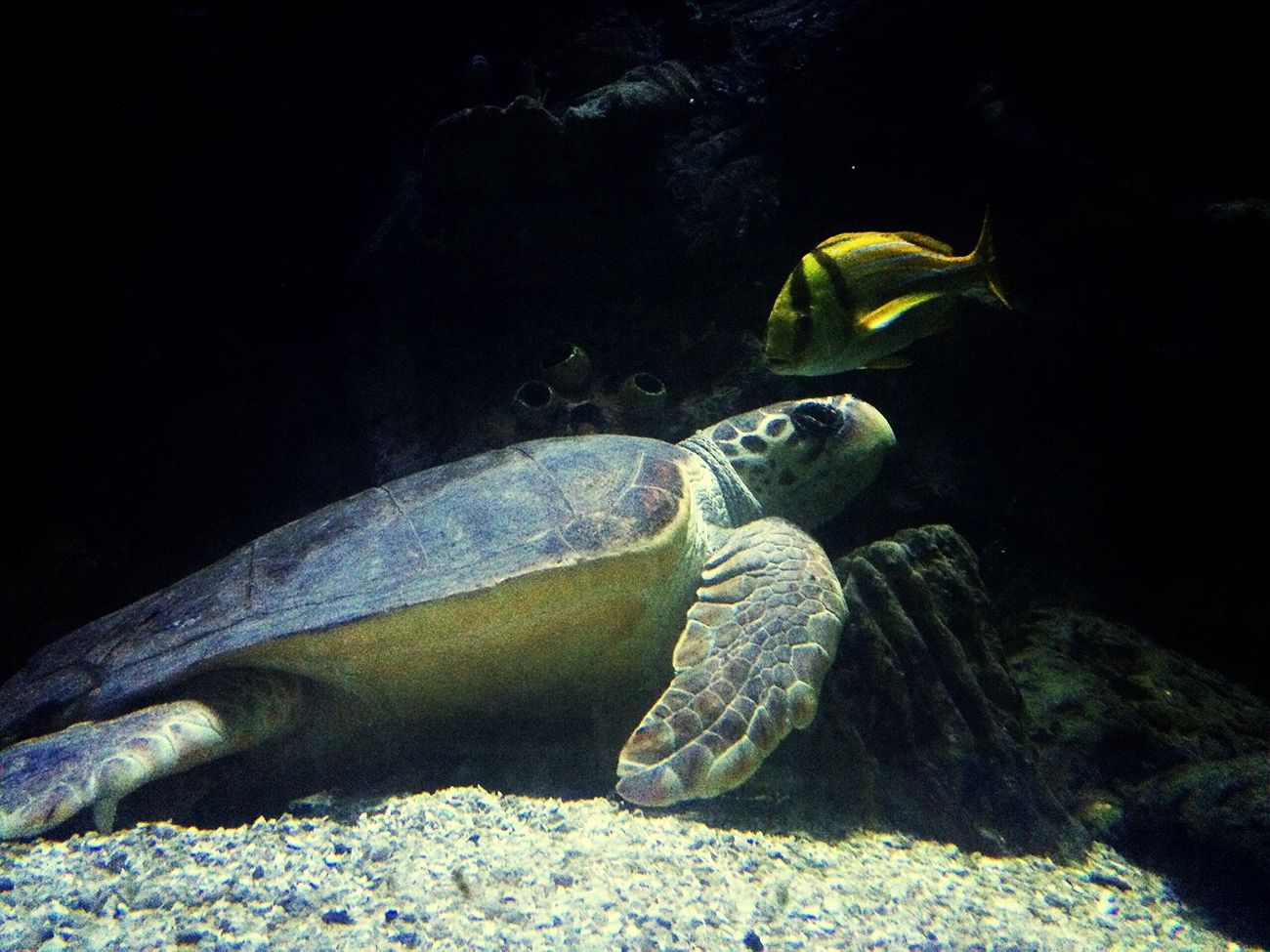🐢 I love them ! So cute Giant Turtle! Aquarium EyeEmSeaLife🐠 x