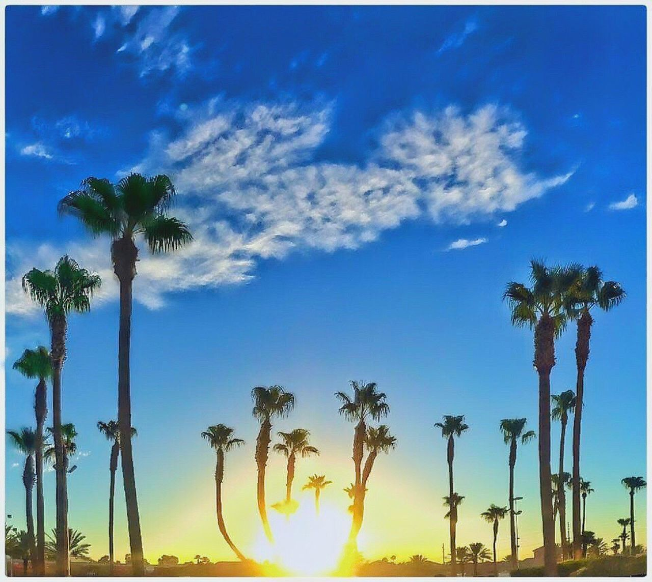 palm tree, tree, sky, blue, cloud - sky, no people, outdoors, beauty in nature, growth, scenics, day, nature