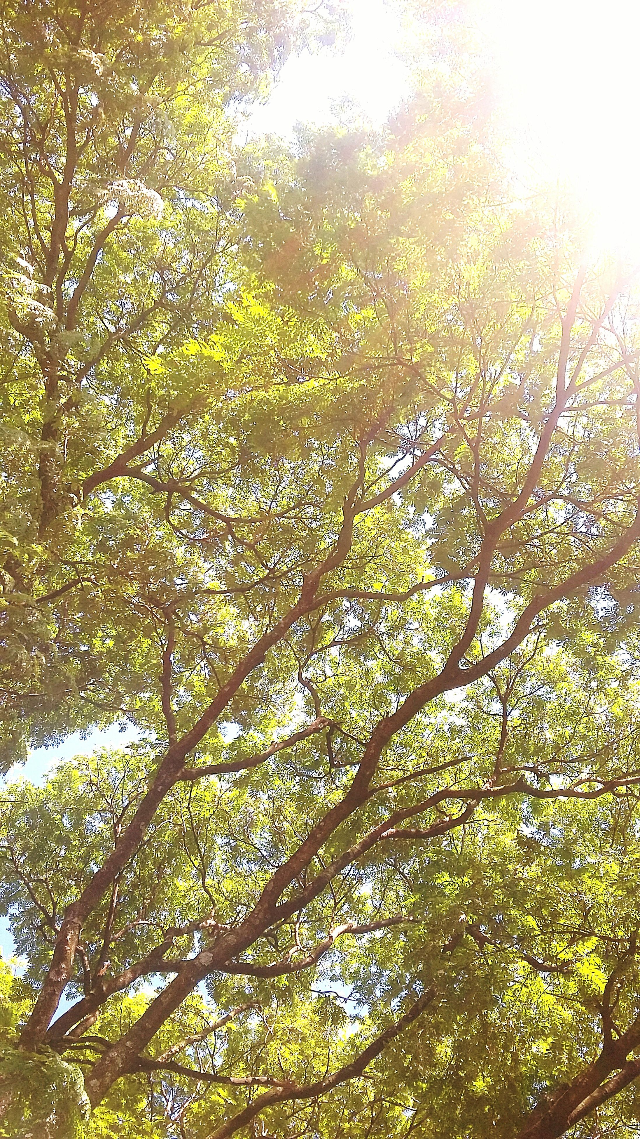 tree, growth, low angle view, branch, green color, nature, tranquility, beauty in nature, leaf, sunlight, lush foliage, full frame, day, forest, outdoors, tranquil scene, scenics, backgrounds, no people, green