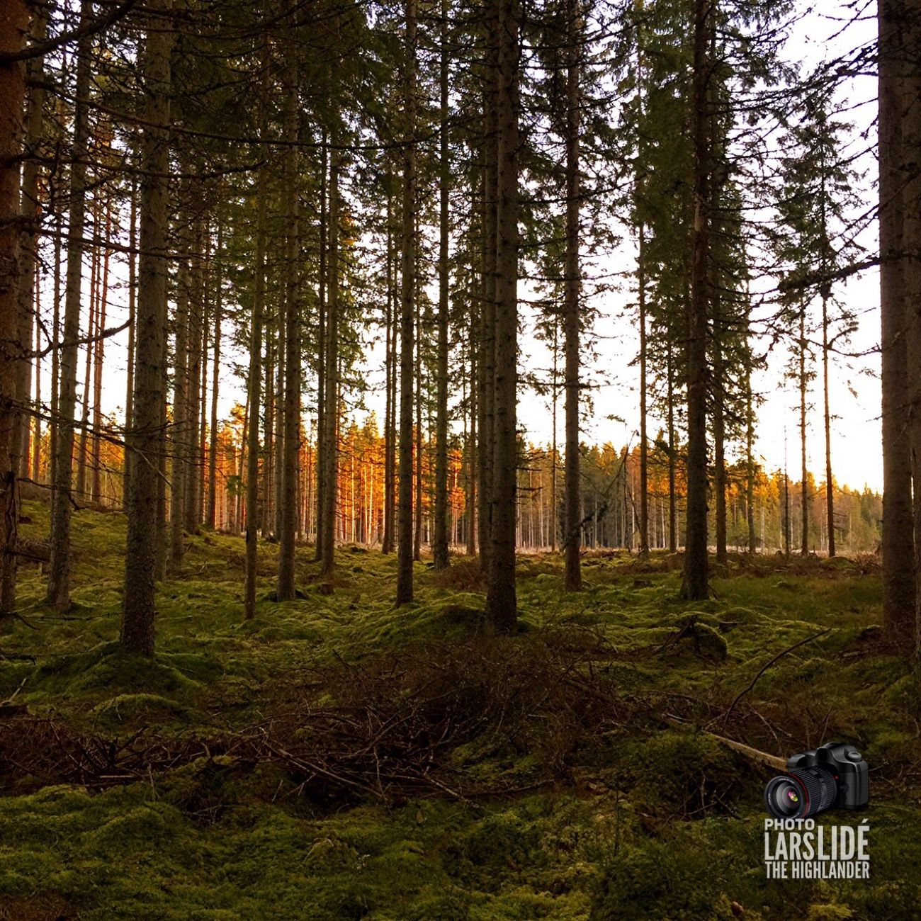 Tree Forest Nature No People Outdoors Beauty In Nature Landscape Countryside Cold Temperature Taking Photos Winter Wilderness Tree Area WoodLand