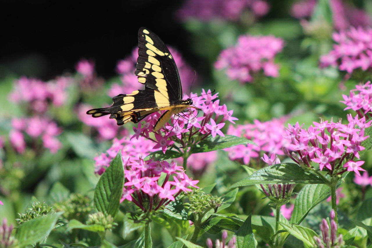Butterfly Perching On Flower In Park