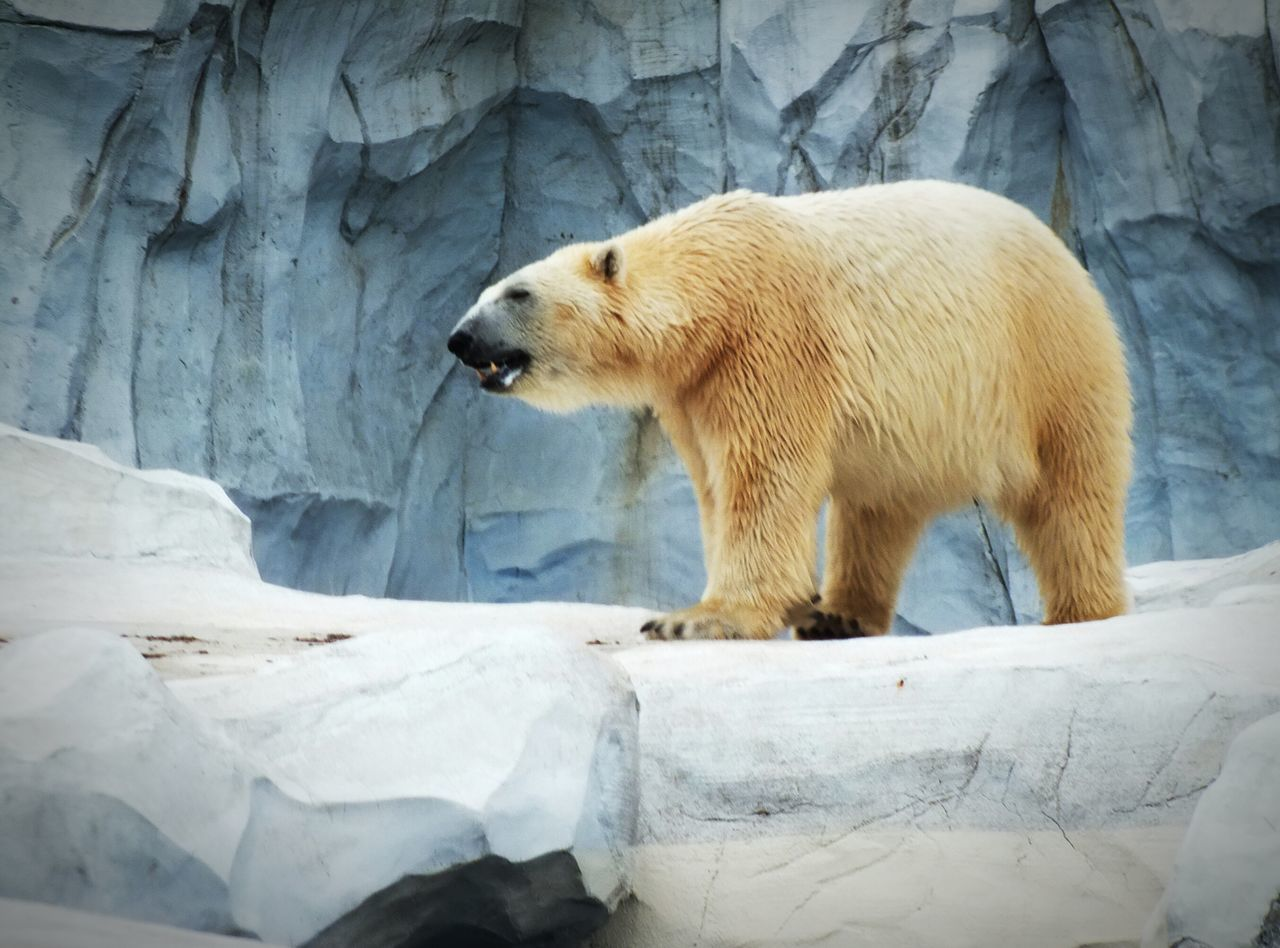 Beautiful stock photos of bear, , Animal Themes, Day, Full Length