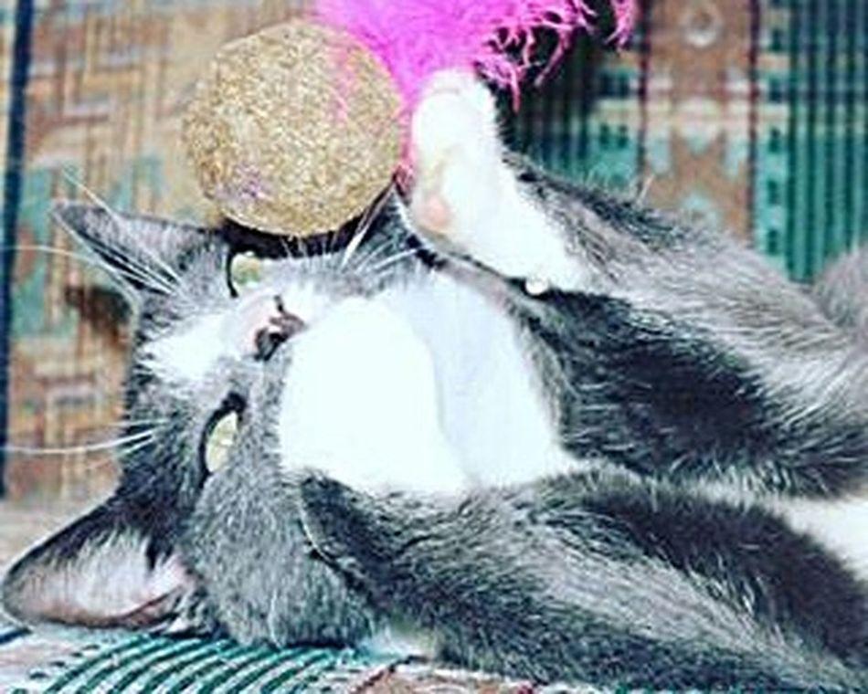 Kitty Catnip Meemeews Mrphatcat