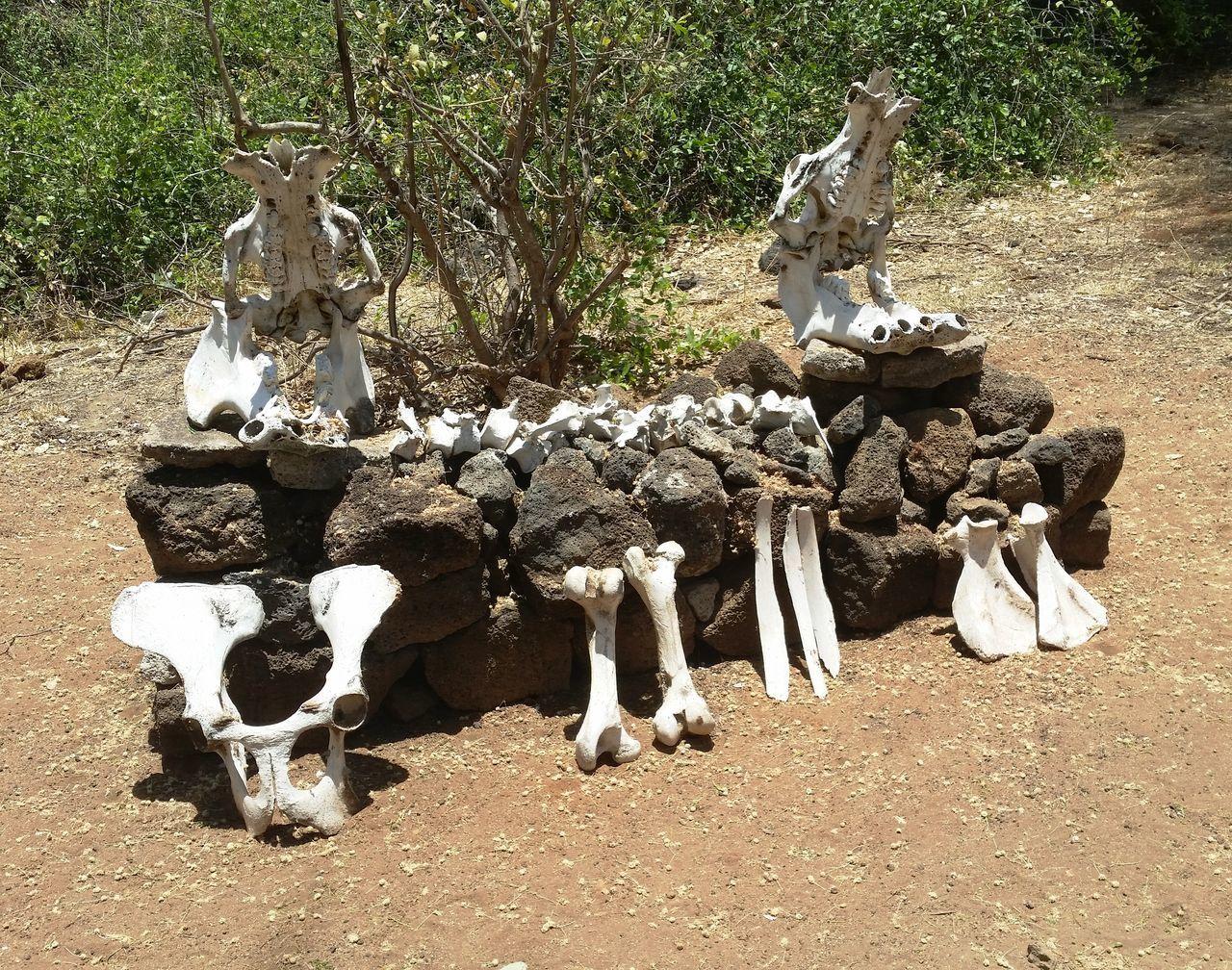 Africa Bones Kenya Nationalpark Nature Safari Skeleton Tsavo