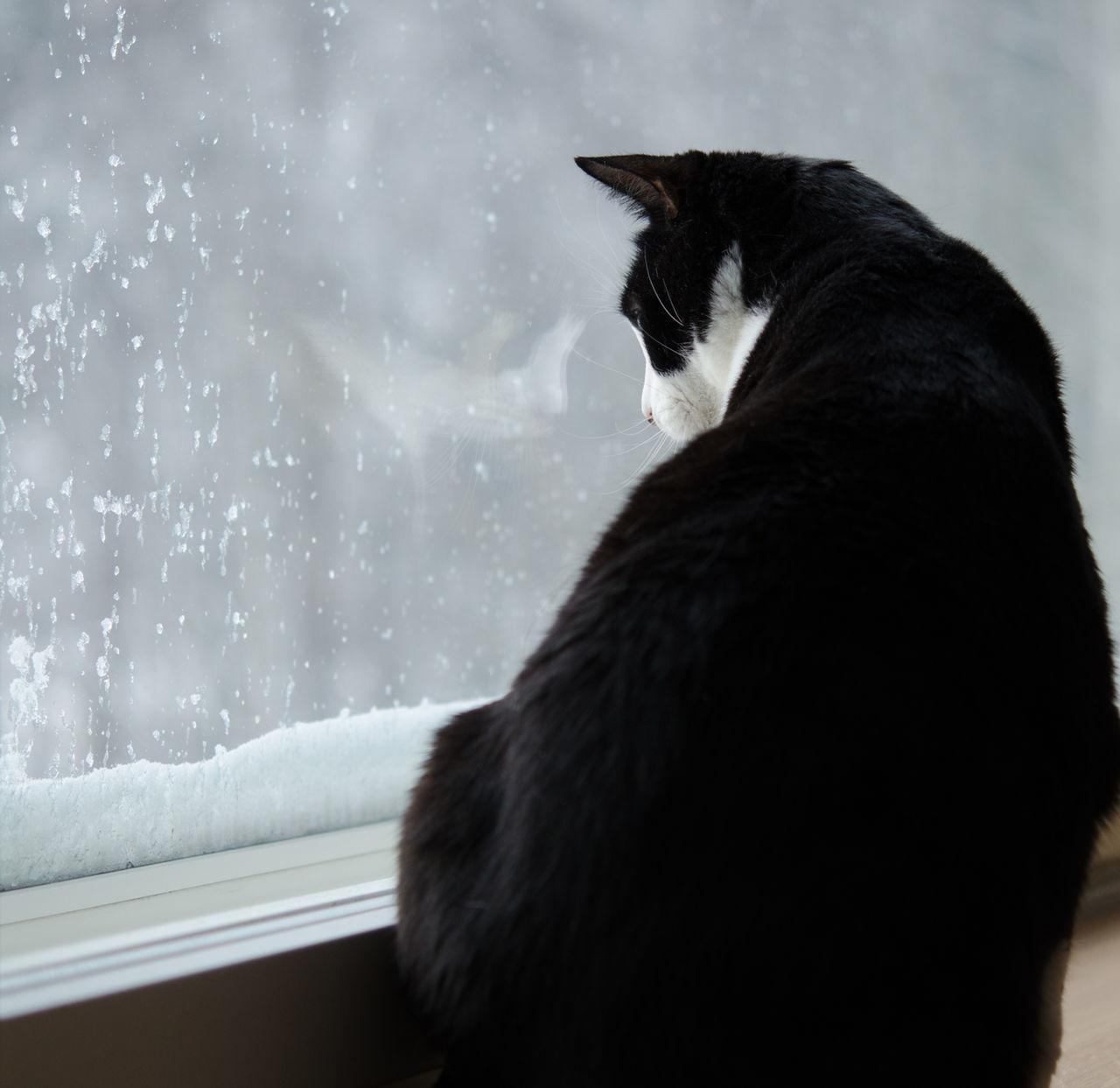 Beautiful stock photos of transparent, Alertness, Animal Themes, Cat, Close-Up