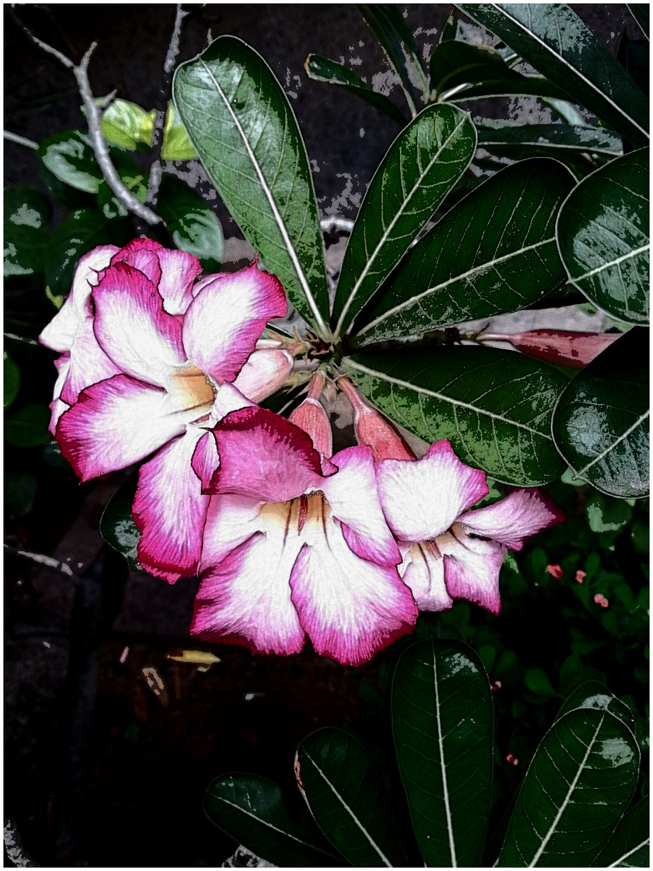 Beauty Happnis Morning Love