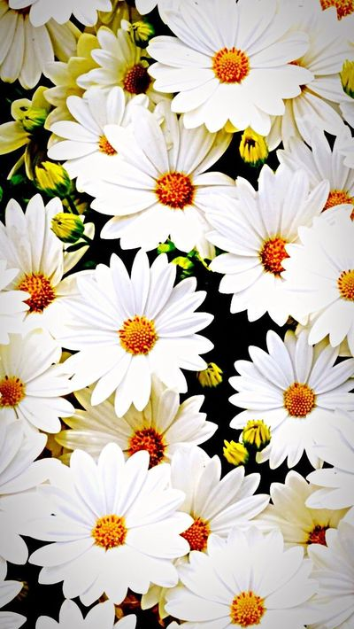 First photograph white flowers Bymyhand First Eyeem Photo