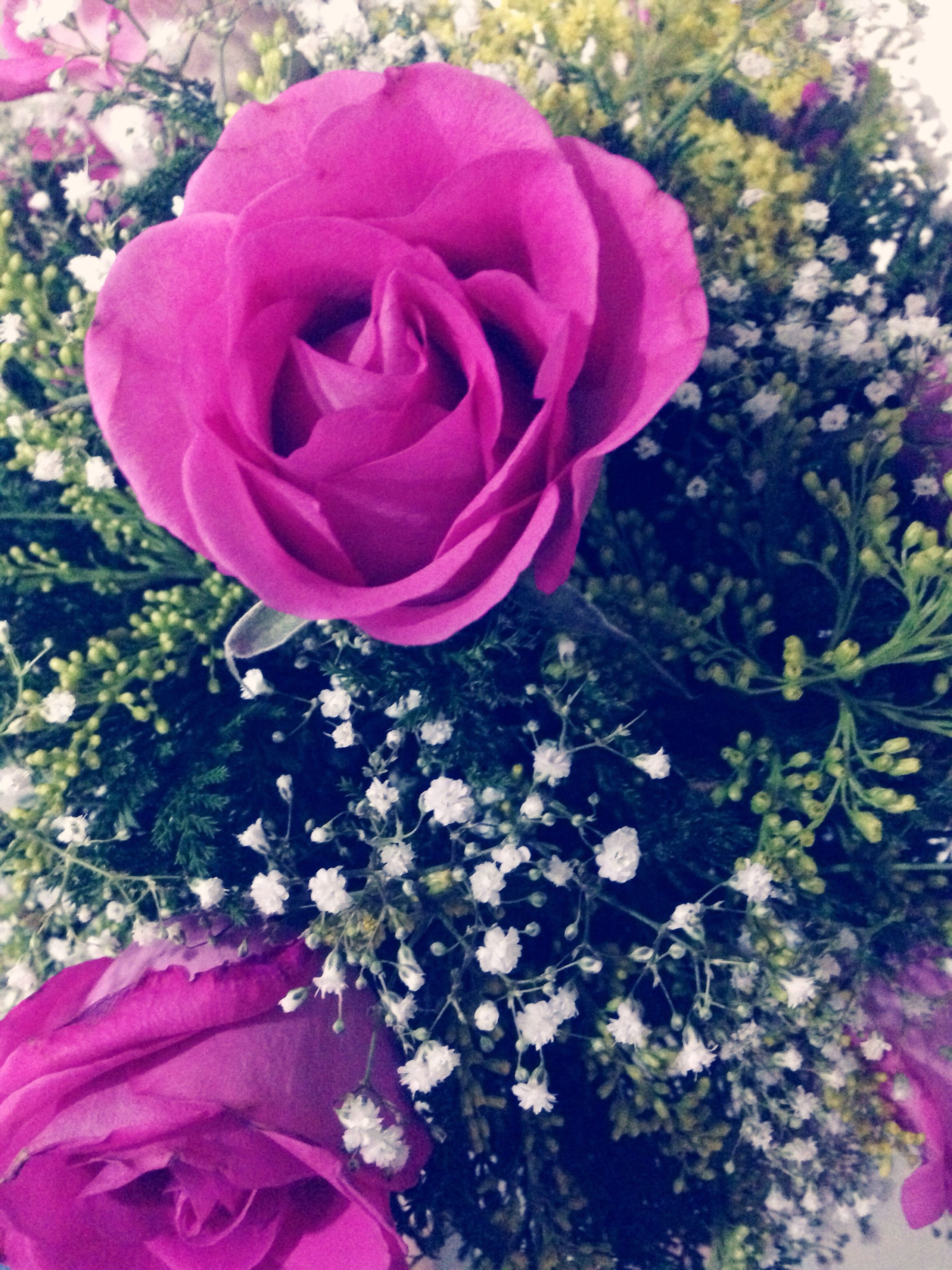 flower, petal, pink color, freshness, fragility, rose - flower, flower head, beauty in nature, growth, pink, nature, close-up, blooming, rose, in bloom, plant, outdoors, single flower, day, no people