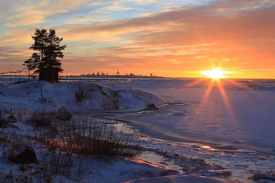 Nature_collection Sunset_collection EyeEm Nature Lover EyeEm Best Shots - Nature Umeå Sweden Sweden Nature Sweden-landscape