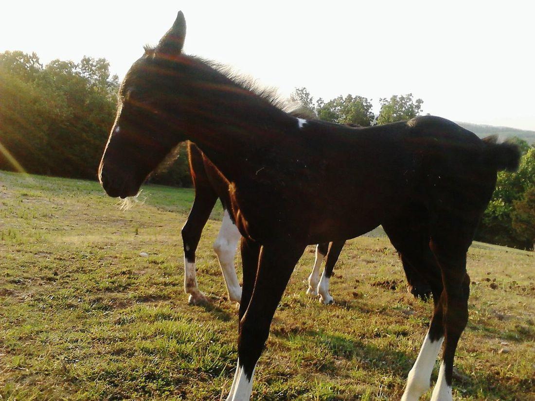 Horsing Around Horses Arkansas_ozarks Harriet Arkansas Nature Beautiful ♥